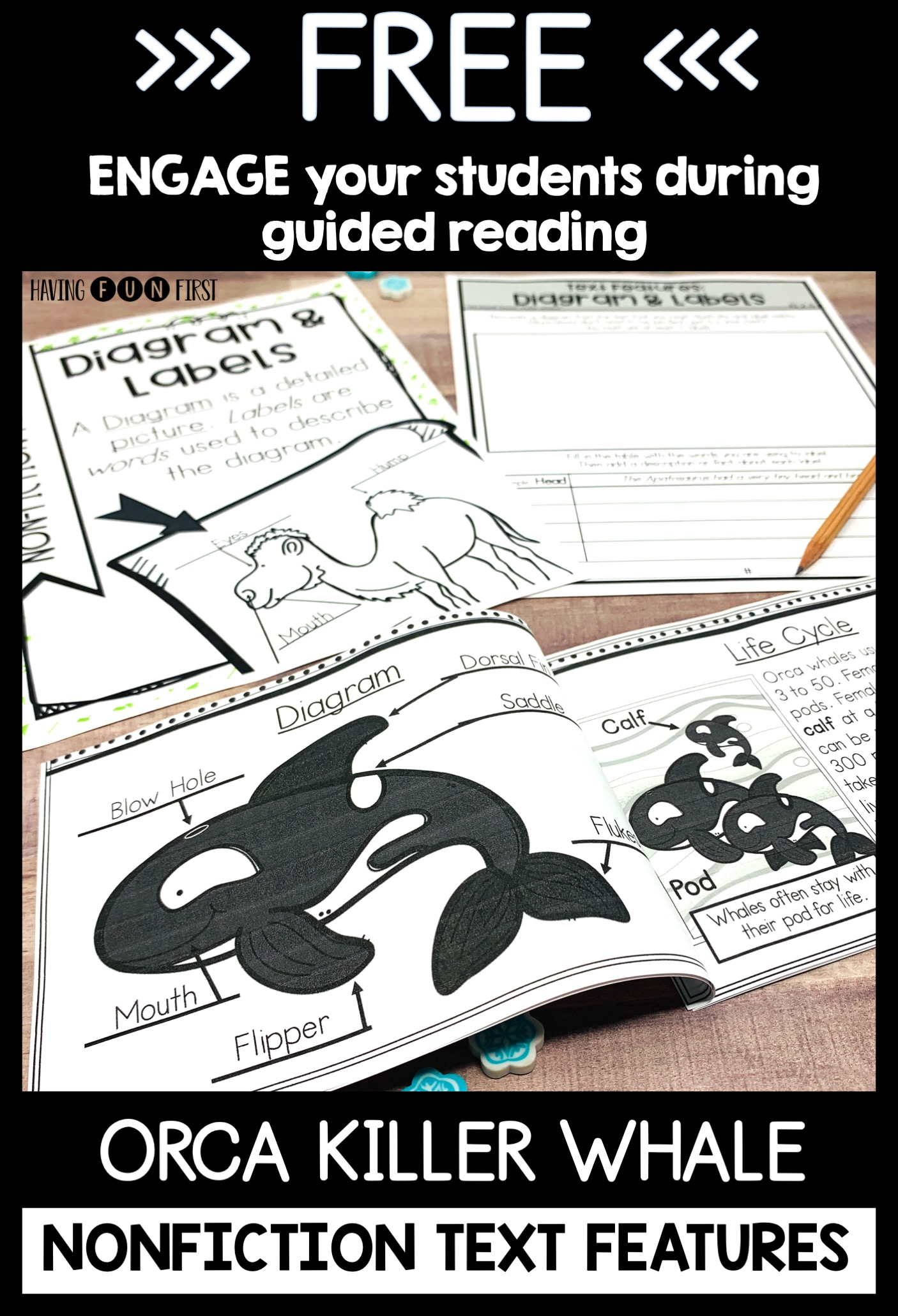 orca whale nonfiction reader with extension activities